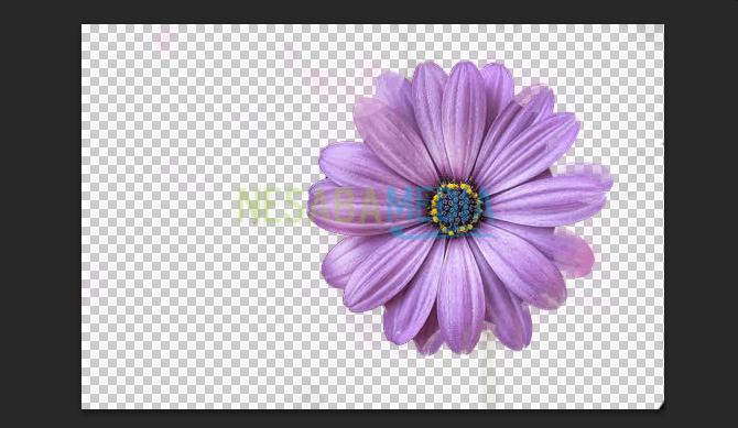 cara menghapus background di photoshop dengan mudah