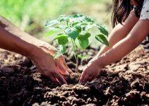 Pengertian Lingkungan dan Manfaat Lingkungan