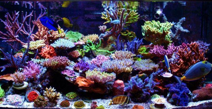 Pengertian Ekosistem Laut