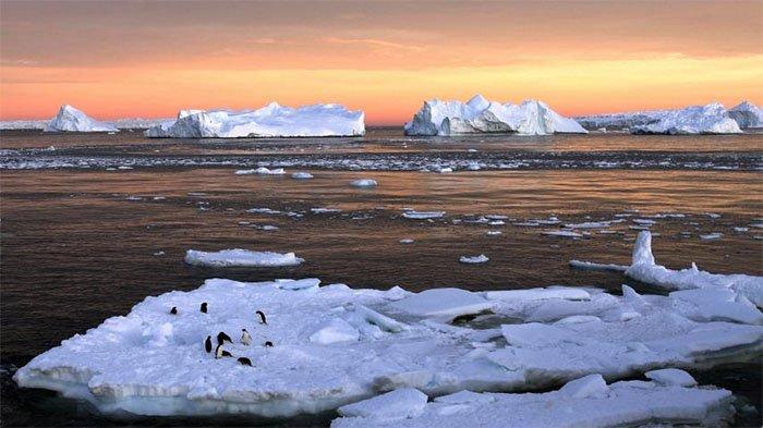 Dampak Pemanasan Global Bagi Lingkungan
