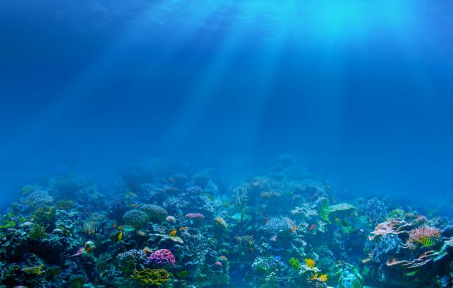 Ekosistem Laut Dalam