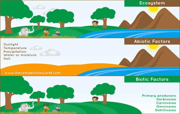 Komponen Ekosistem Laut