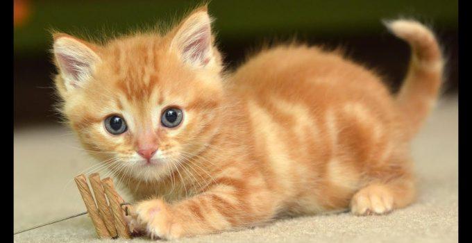 Jenis- Jenis Kucing
