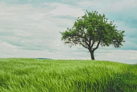 Contoh Karangan Narasi tentang Alam