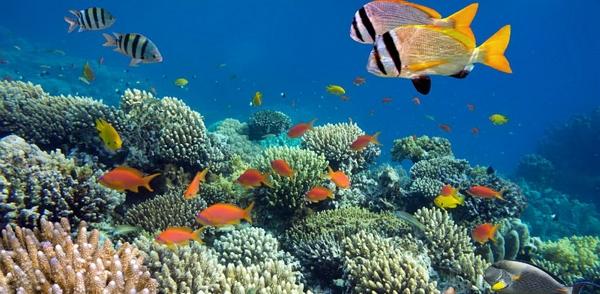 Contoh Rantai Makanan di Laut
