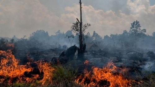 teks eksplanasi tentang kebakaran hutan