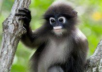 10 Cagar Alam di Indonesia