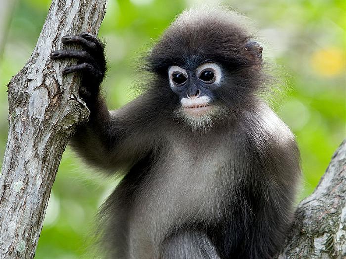 Cagar Alam di Indonesia Siberut, Sumatera Barat