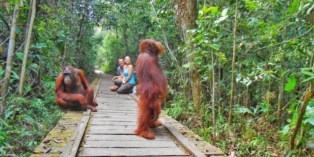 Cagar Alam Tanjung Puting, Kalimantan Tengah