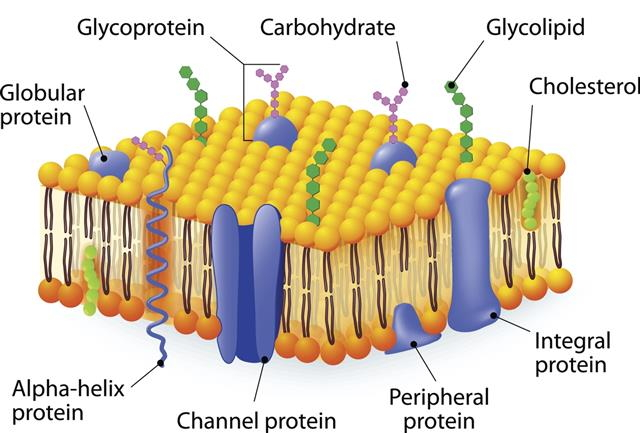 Ciri-ciri Bakteri dan Struktur Bakteri
