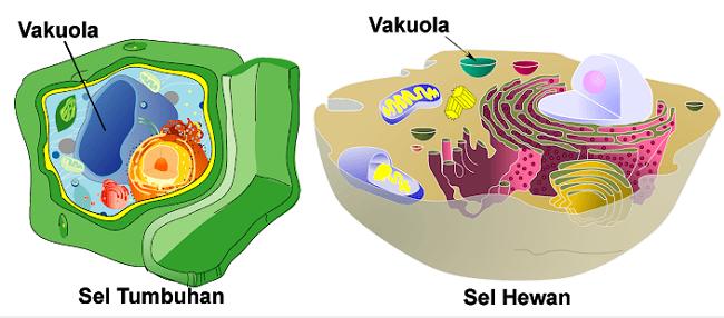 Struktur Bakteri dan Penjelasannya