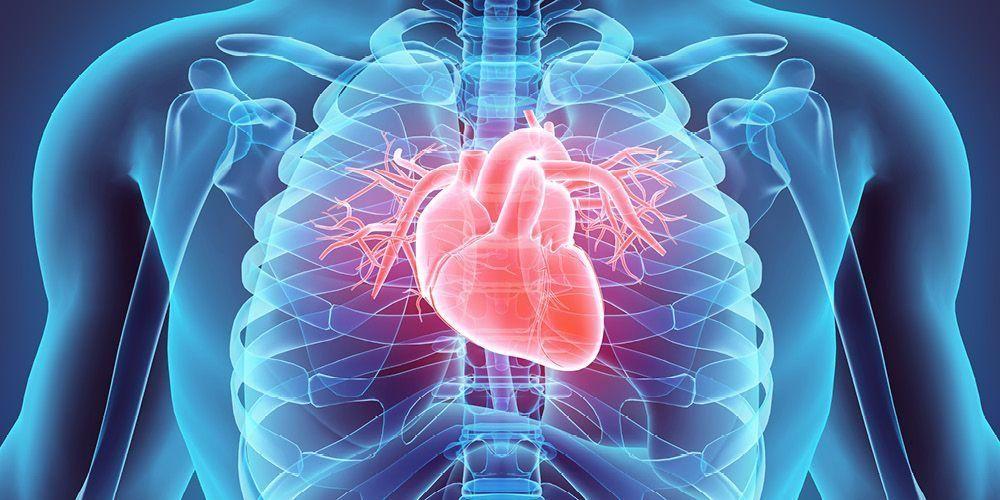 Kenali Ciri Ciri Otot Polos Lurik Jantung Penjelasan Lengkap